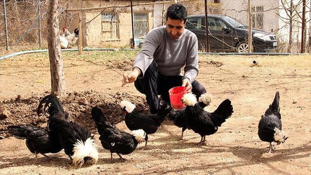 Beşiktaş sevgisi yetiştirdiği tavuklara da yansıdı
