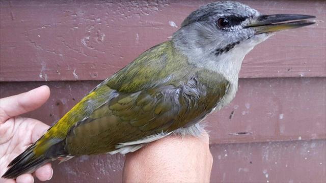 Yeni kuş türü tespit edildi