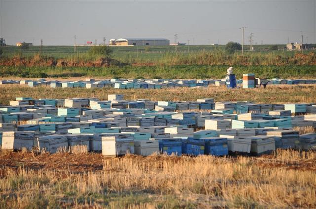 Milyonlarca arı öldü