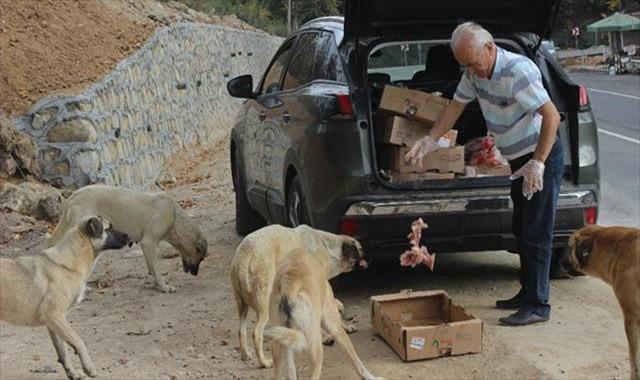 Her gün 5 saatini sokak hayvanlarına ayırıyor