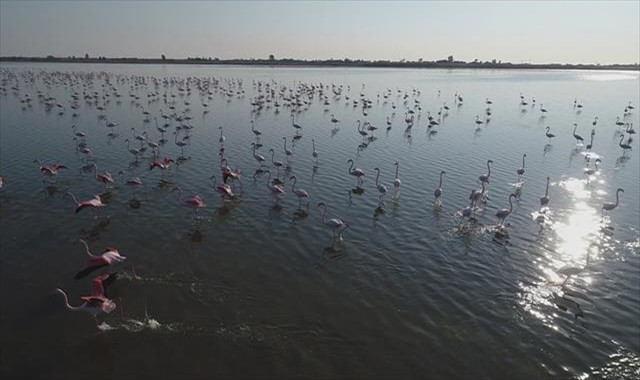 Çukurova Deltası flamingolarla renklendi