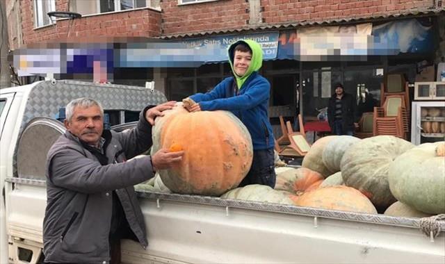 75 kiloluk kabak