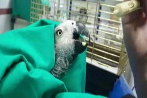 İşkence Edilen Papağanın Son Durumu Böyle Görüntülendi