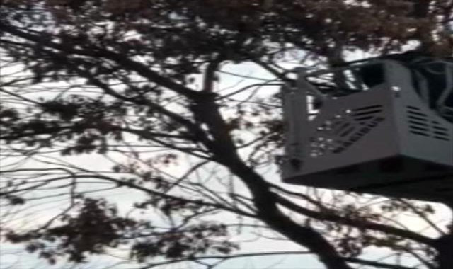 Ağaçtaki ipe takılan güvencin böyle kurtarıldı