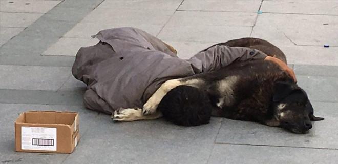 Köpeğine sarılıp kaldırımda uyuyan gencin kim olduğu ortaya çıktı!