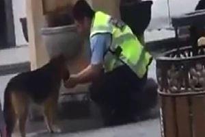 Trafik polisi, avucuyla köpeğe su içirdi