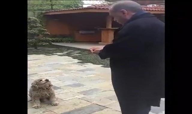 Erdoğan küçük köpeği böyle besledi