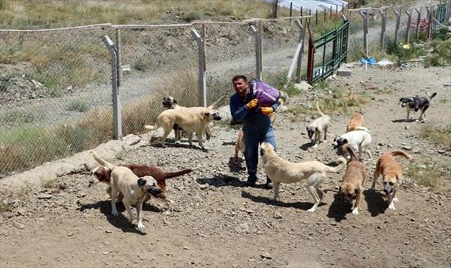 Ömrünü sokak köpeklerine adadı