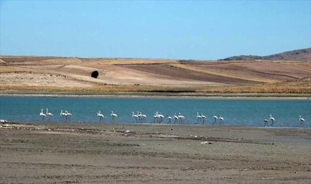 Gelingüllü Barajı flamingolarla renklendi