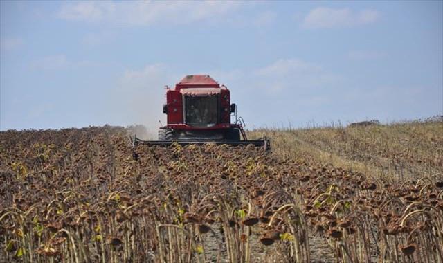 'Sarı Gelin'nde hasat başladı