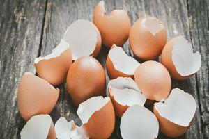 Yumurta kabuğunu çöpe atmak yerine yemeye ne dersiniz?