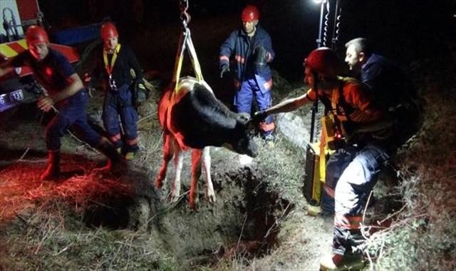 Çukura düşen danayı itfaiye ekipleri kurtardı