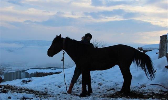 Terk edilen at ve eşekler koruma altına alındı
