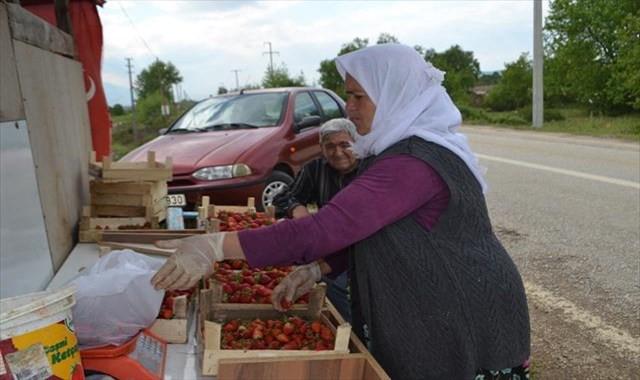 Bursa Çileği'nde ilk hasat başladı